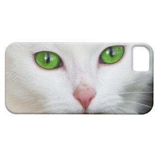 Amante blanco hermoso del animal del gatito del funda para iPhone SE/5/5s