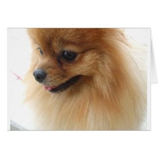 Amante de Pomeranian Tarjeta De Felicitación