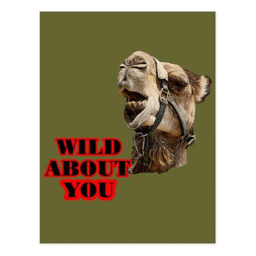 Amante del camello postales