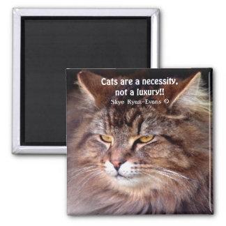 Amante del gato de Coon de Maine del Tabby y imán