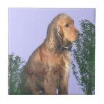 Amante del perro de cocker spaniel