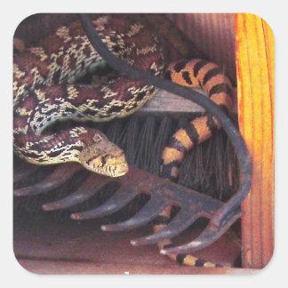 Amante real lindo de la serpiente de Gopher de Pegatina Cuadrada
