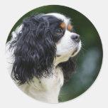 Amantes arrogantes del perro del perro de aguas de pegatina redonda