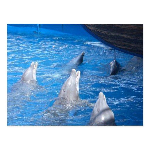 Amantes de los delfínes postales