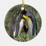Amantes de los pingüinos de rey ornato