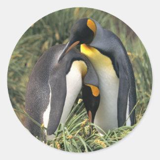 Amantes de los pingüinos de rey pegatina redonda