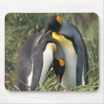 Amantes de los pingüinos de rey tapetes de ratones