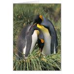 Amantes de los pingüinos de rey tarjeton