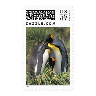 Amantes de los pingüinos de rey timbres postales