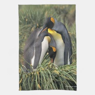 Amantes de rey pingüino toalla