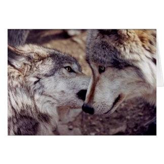 Amantes del lobo tarjetas