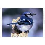 Amantes del pájaro del arrendajo azul tarjeton