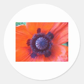 amapola, amapola roja oriental pegatina redonda