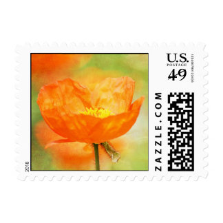 Amapola anaranjada sellos