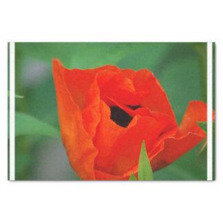 Amapola anaranjada vibrante papel de seda pequeño