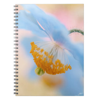 Amapola azul libros de apuntes con espiral