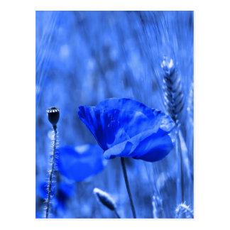 Amapola azul postales