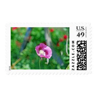 Amapola bonita sello