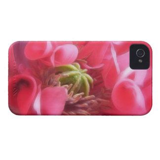 Amapola de Breadseed - Papaver - somniferum Case-Mate iPhone 4 Protectores