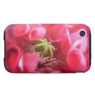 Amapola de Breadseed - Papaver - somniferum iPhone 3 Tough Cobertura