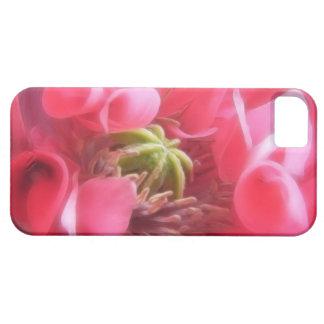 Amapola de Breadseed - Papaver - somniferum iPhone 5 Carcasas