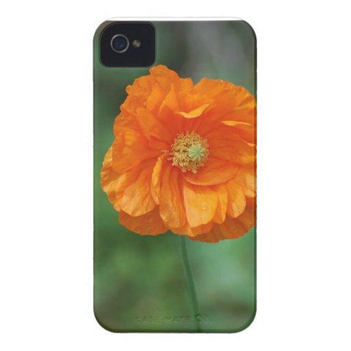 Amapola de California anaranjada Case-Mate iPhone 4 Carcasas