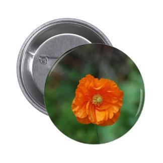 Amapola de California anaranjada perfecta Pin