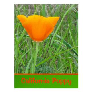 Amapola de California anaranjada Tarjeta Postal