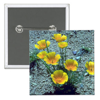Amapola de California, Arizona Pins