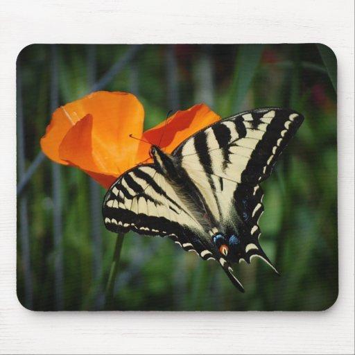 Amapola de California de la mariposa y del naranja Mouse Pad
