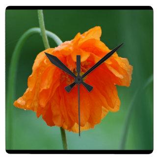 Amapola de California floreciente Reloj Cuadrado