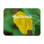 Amapola de California Imanes