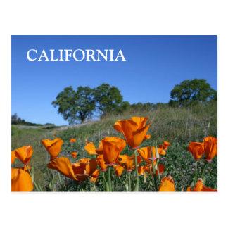 Amapola de California, postal