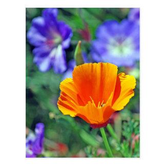 Amapola de California y floraciones púrpuras Postal