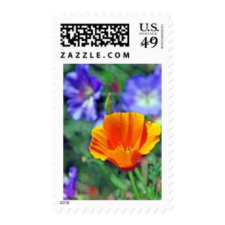 Amapola de California y floraciones púrpuras Sello