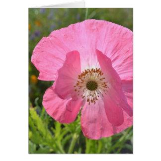 Amapola de Islandia rosada del verano Felicitaciones