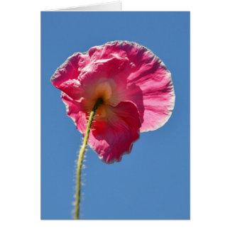 Amapola de Islandia rosada en el cielo Tarjeton