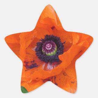 Amapola de jardín oriental pegatina en forma de estrella