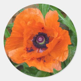 Amapola de jardín oriental pegatina redonda