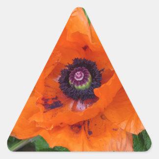 Amapola de jardín oriental pegatina triangular