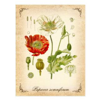 Amapola de opio - ejemplo del vintage postales