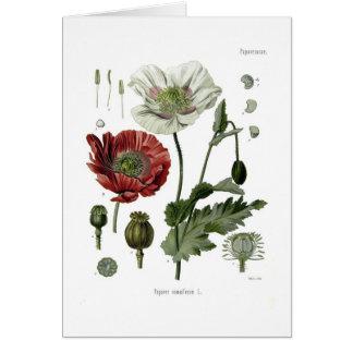 Amapola de opio tarjeta de felicitación