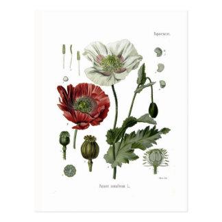 Amapola de opio postales