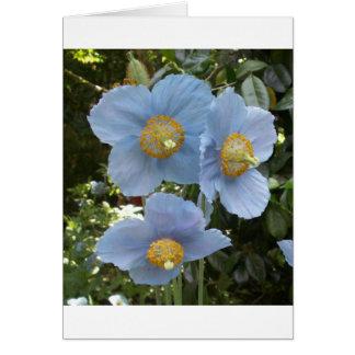 amapola himalayan azul tarjetas