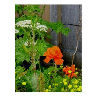 Amapola oriental anaranjada entre malas hierbas postal