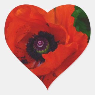 Amapola oriental roja pegatina en forma de corazón