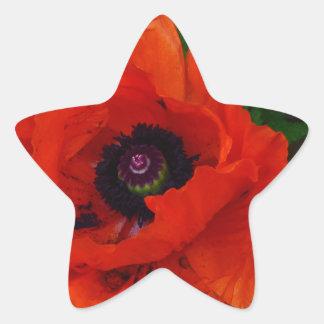 Amapola oriental roja pegatina en forma de estrella