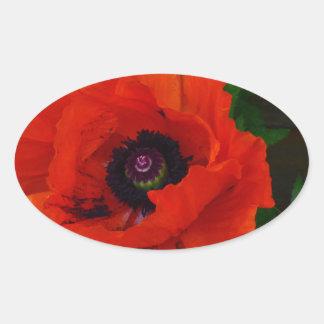 Amapola oriental roja pegatina ovalada