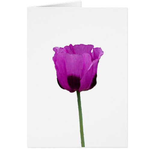 Amapola púrpura tarjeta de felicitación