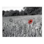 amapola roja en un campo blanco y negro postal